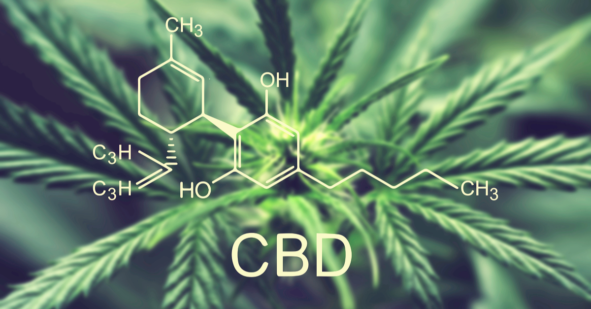 A Beginner's Guide to CBD Terms & Lingo Hero Image