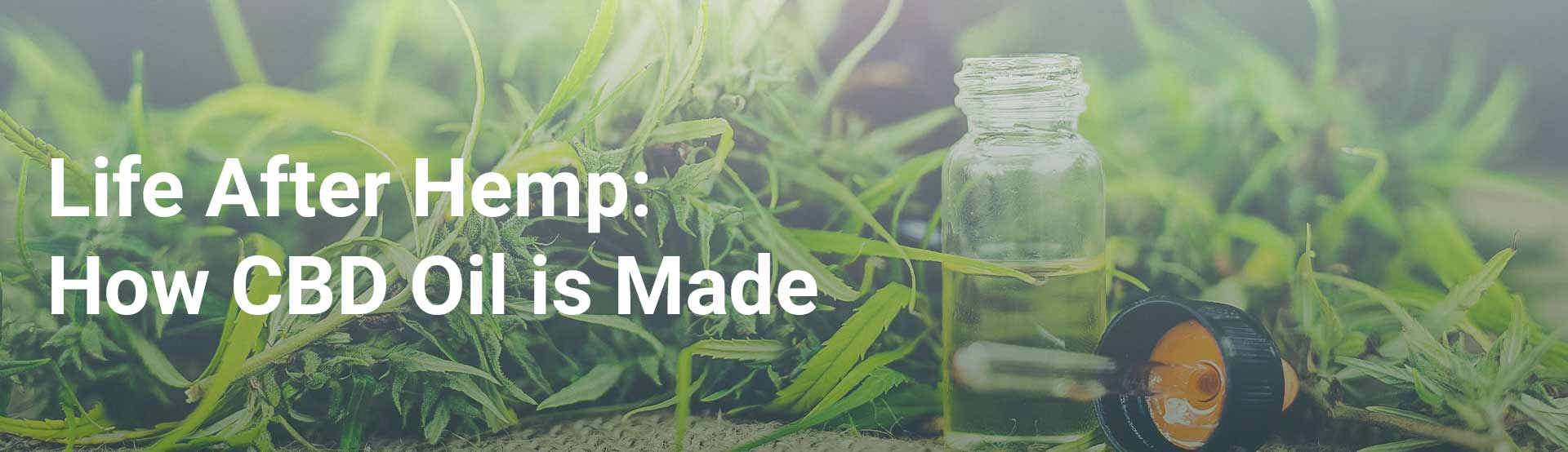How CBD oil is made image - banner image