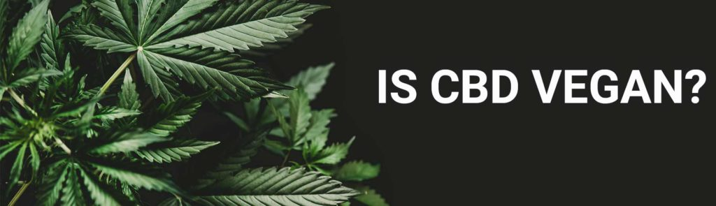 Is CBD Vegan? Image of hemp leaves