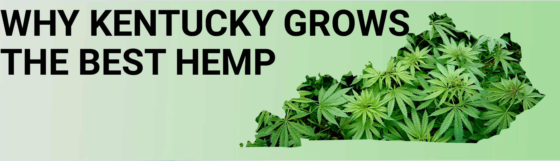 Why Kentucky Grows the Best Hemp - Hero Image