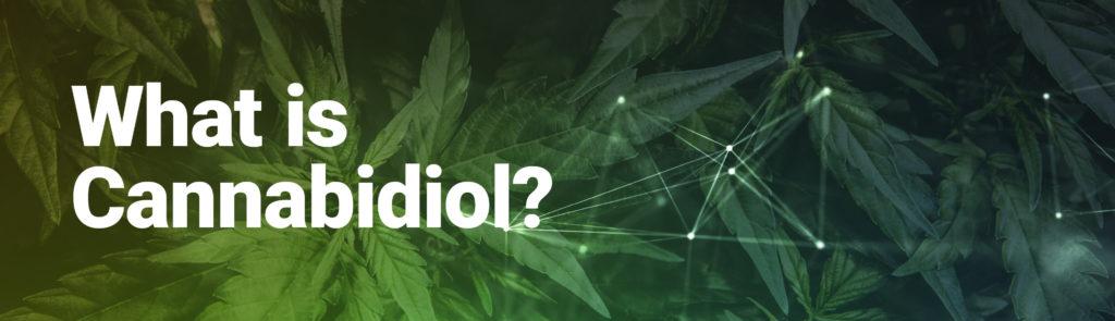 Cannabidiol? Picture of hemp leaves